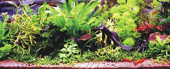 Перший акваріум однак ракурс інший